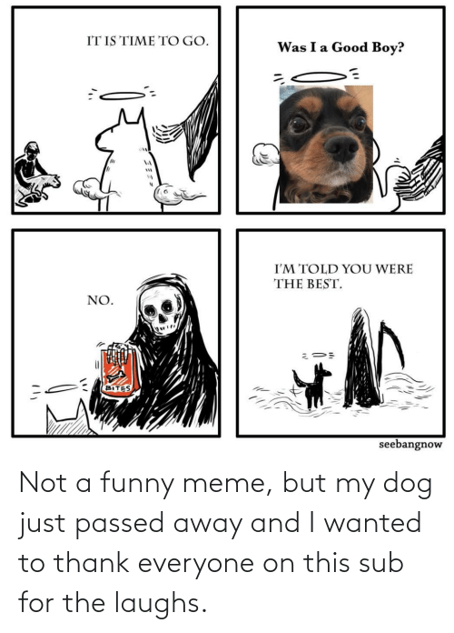 funny meme: Not a funny meme, but my dog just passed away and I wanted to thank everyone on this sub for the laughs.