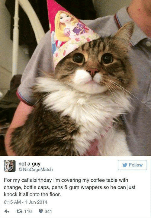 Birthday, Cats, and Memes: not a guy  @NicCageMatch  Follow  For my cat's birthday I'm covering my coffee table with  change, bottle caps, pens & gum wrappers so he can just  knock it all onto the floor  6:15 AM -1 Jun 2014  116 341