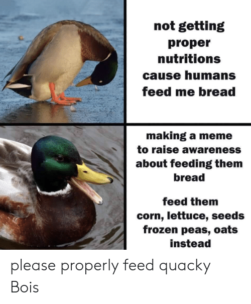 Frozen, Meme, and Corn: not getting  proper  nutritions  cause humans  feed me bread  making a meme  to raise awareness  about feeding them  bread  feed them  corn, lettuce, seeds  frozen peas, oats  instead please properly feed quacky Bois