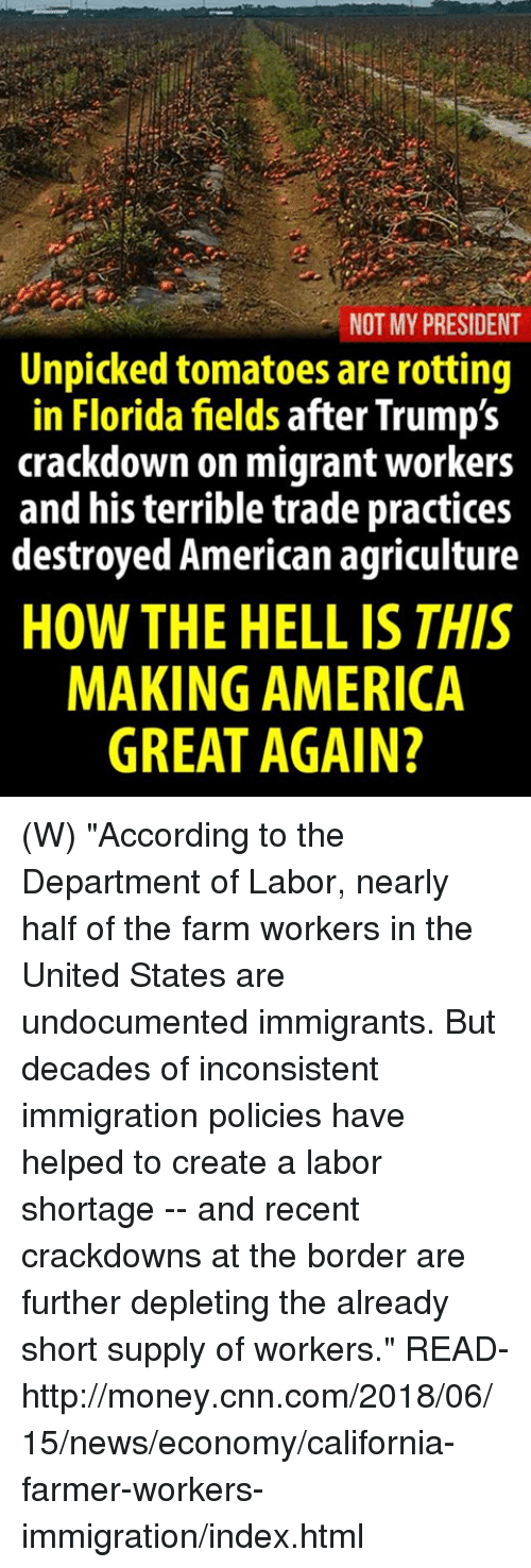"""Not My President: NOT MY PRESIDENT  Unpicked tomatoes are rotting  in Florida fields after Trump's  crackdown on migrant workers  and his terrible trade practices  destroyed American agriculture  HOW THE HELL IS THIS  MAKING AMERICA  GREAT AGAIN? (W) """"According to the Department of Labor, nearly half of the farm workers in the United States are undocumented immigrants. But decades of inconsistent immigration policies have helped to create a labor shortage -- and recent crackdowns at the border are further depleting the already short supply of workers.""""  READ-  http://money.cnn.com/2018/06/15/news/economy/california-farmer-workers-immigration/index.html"""