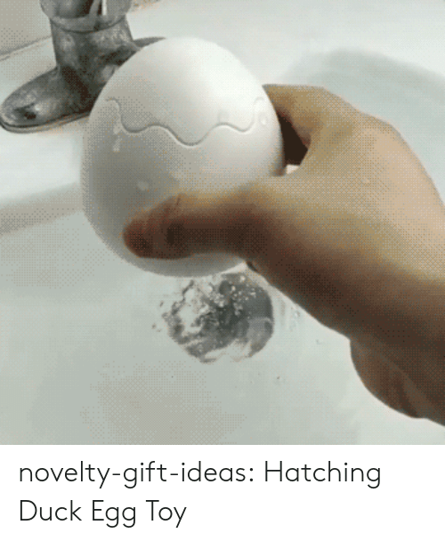 Tumblr, Blog, and Duck: novelty-gift-ideas:  Hatching Duck Egg Toy