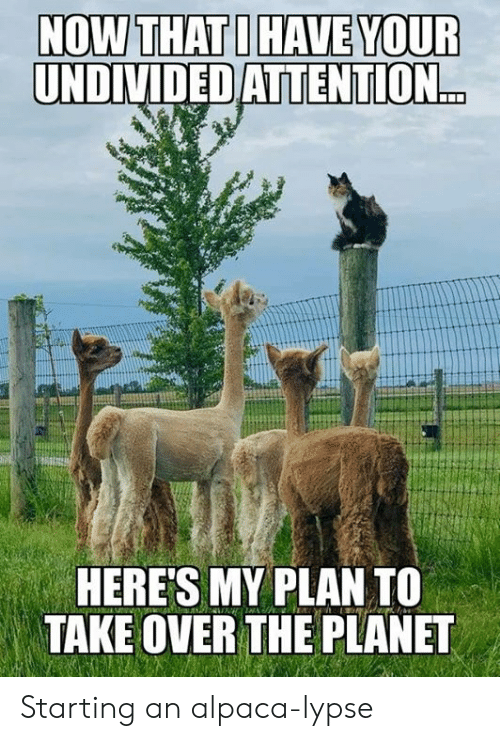 Dank, Alpaca, and 🤖: NOW THAT I HAVE YOUR  UNDIVIDED ATTENTION...  HERE'S MY PLAN TO  TAKE OVER THE PLANET Starting an alpaca-lypse