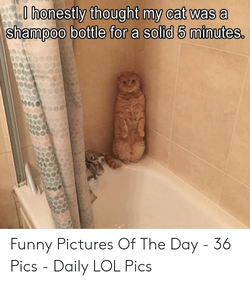 Funny, Lol, and Pictures: O honestly thought my cat was a  shampoo bottle for a solid 5 minutes. Funny Pictures Of The Day - 36 Pics - Daily LOL Pics