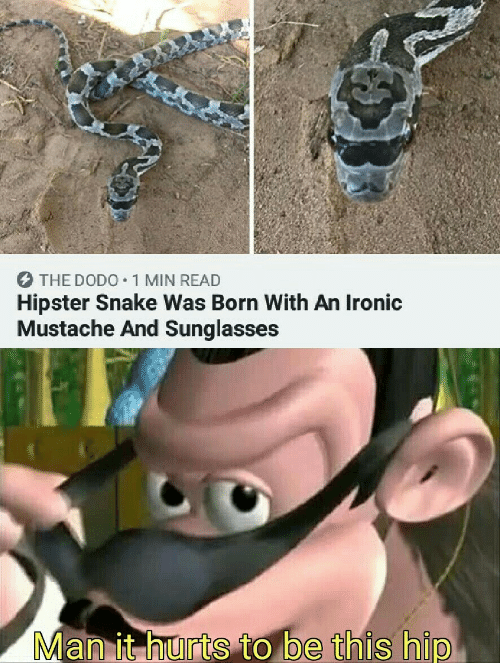 Ironic: O THE DOD0•1 MIN READ  Hipster Snake Was Born With An Ironic  Mustache And Sunglasses  Man it hurts to be this hip