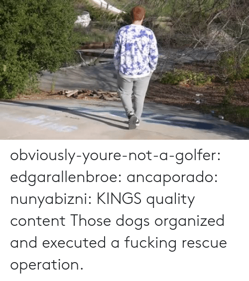 operation: obviously-youre-not-a-golfer:  edgarallenbroe:  ancaporado:  nunyabizni: KINGS quality content    Those dogs organized and executed a fucking rescue operation.