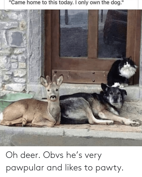 Very: Oh deer. Obvs he's very pawpular and likes to pawty.