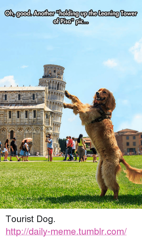 """Meme, Tumblr, and Http: Oh, goodb Another Tholding upthe Leaning Tower <p>Tourist Dog.<br/><a href=""""http://daily-meme.tumblr.com""""><span style=""""color: #0000cd;""""><a href=""""http://daily-meme.tumblr.com/"""">http://daily-meme.tumblr.com/</a></span></a></p>"""