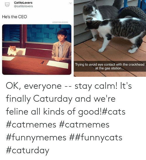 were: OK, everyone -- stay calm! It's finally Caturday and we're feline all kinds of good!#cats #catmemes #catmemes #funnymemes ##funnycats #caturday