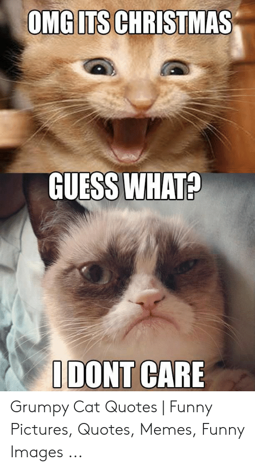 Funny Grumpy Cat Christmas Memes.Omg Its Christmas Guess What I Dont Care Grumpy Cat Quotes