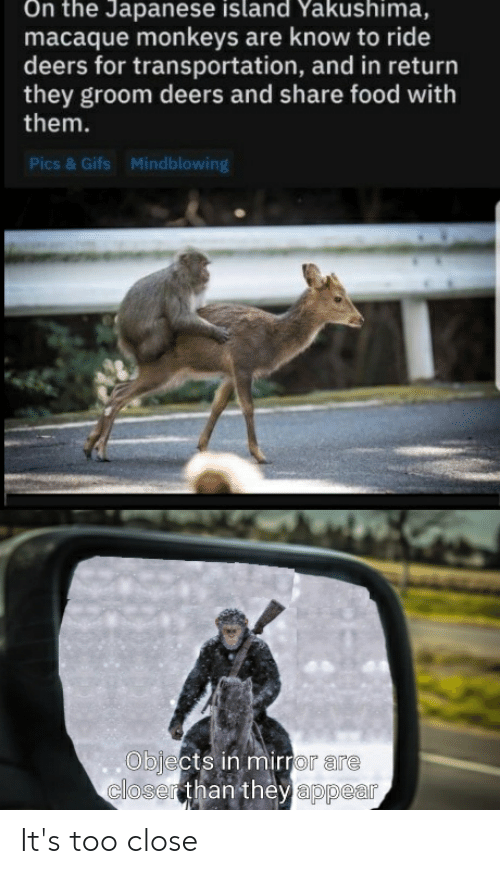 Share Food: On the Japanese island Yakushima,  macaque monkeys are know to ride  deers for transportation, and in return  they groom deers and share food with  them.  Pics & Gifs  Mindblowing  Objects in mirror are  closerthan they appear It's too close