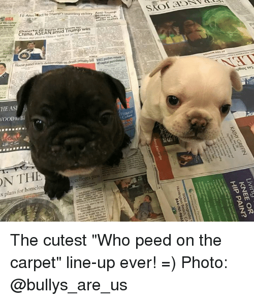 """College, Homeless, and Memes: ON THE  to Bl  Fil Ams react to Trump stunning victory Anti T  China  ASEAN am  Trump win  House panel starts deliberation on death penalty  bil VACC pushesf  pass  colleges x for homeless  plans The cutest """"Who peed on the carpet"""" line-up ever!    =)  Photo: @bullys_are_us"""