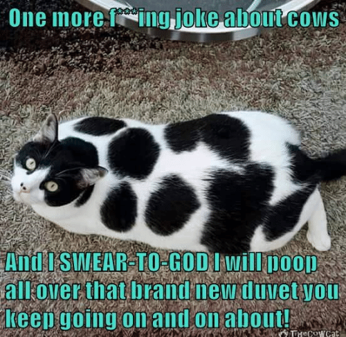 fing: One more fing joke about cOws  And I SWEAR-TO GOD I will poop  all over that brand new duvet you  Keep going on and on about!  TTHeCowcat