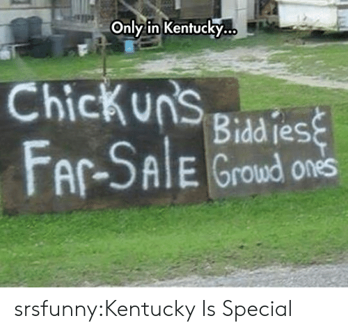 Tumblr, Blog, and Http: Only in Kentucky.  Chickuns giad es  AlE Groud ones srsfunny:Kentucky Is Special