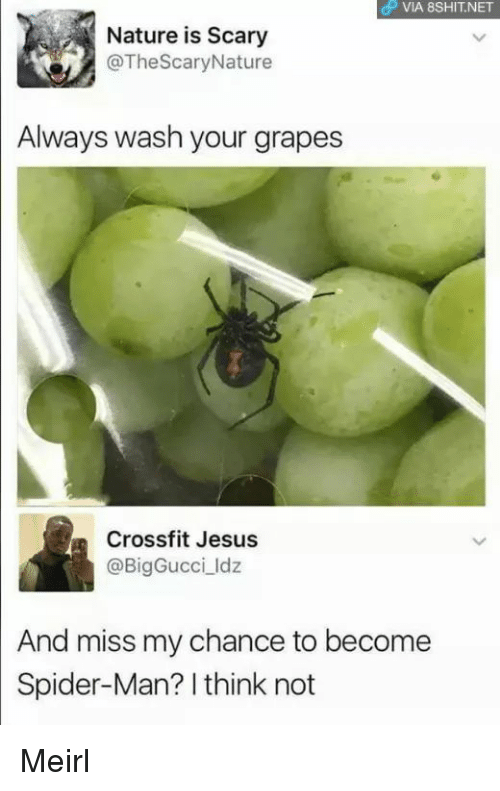 Jesus, Spider, and SpiderMan: OP VIA 8SHIT.NET  Nature is Scary  @TheScaryNature  Always wash your grapes  Crossfit Jesus  @BigGucci ldz  And miss my chance to become  Spider-Man? I think not Meirl