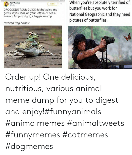 order: Order up! One delicious, nutritious, various animal meme dump for you to digest and enjoy!#funnyanimals #animalmemes #animaltweets #funnymemes #catmemes #dogmemes