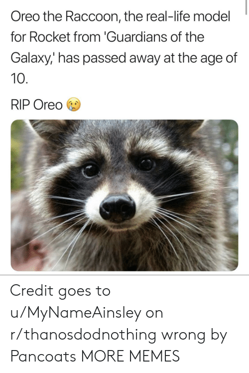Guardians: Oreo the Raccoon, the real-life model  for Rocket from 'Guardians of the  Galaxy,' has passed away at the age of  10  RIP Oreo Credit goes to u/MyNameAinsley on r/thanosdodnothing wrong by Pancoats MORE MEMES