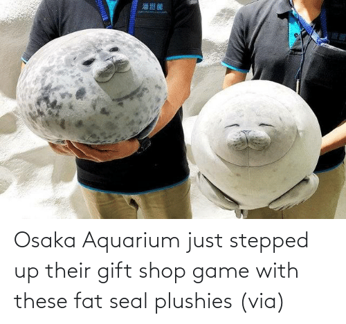 Game: Osaka Aquarium just stepped up their gift shop game with these fat seal plushies (via)