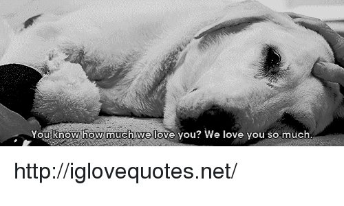 Love, Http, and How: ou know how much.we love you? We love you so much http://iglovequotes.net/