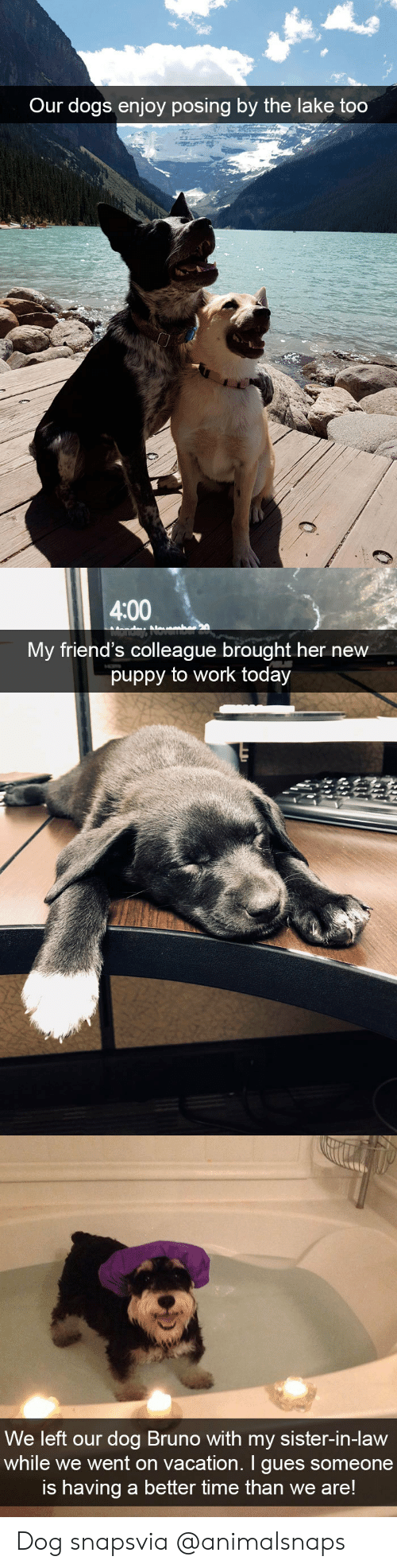 Dogs, Friends, and Target: Our dogs enjoy posing by the lake too   4:00  My friend's colleague brought her new  puppy to work today   We left our dog Bruno with my sister-in-Haw  while we went on vacation. I gues someone  is having a better time than we are! Dog snapsvia @animalsnaps​