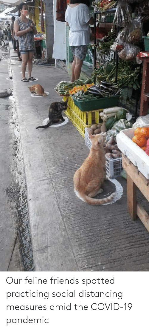 pandemic: Our feline friends spotted practicing social distancing measures amid the COVID-19 pandemic