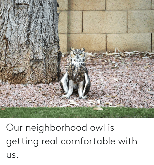 Us: Our neighborhood owl is getting real comfortable with us.