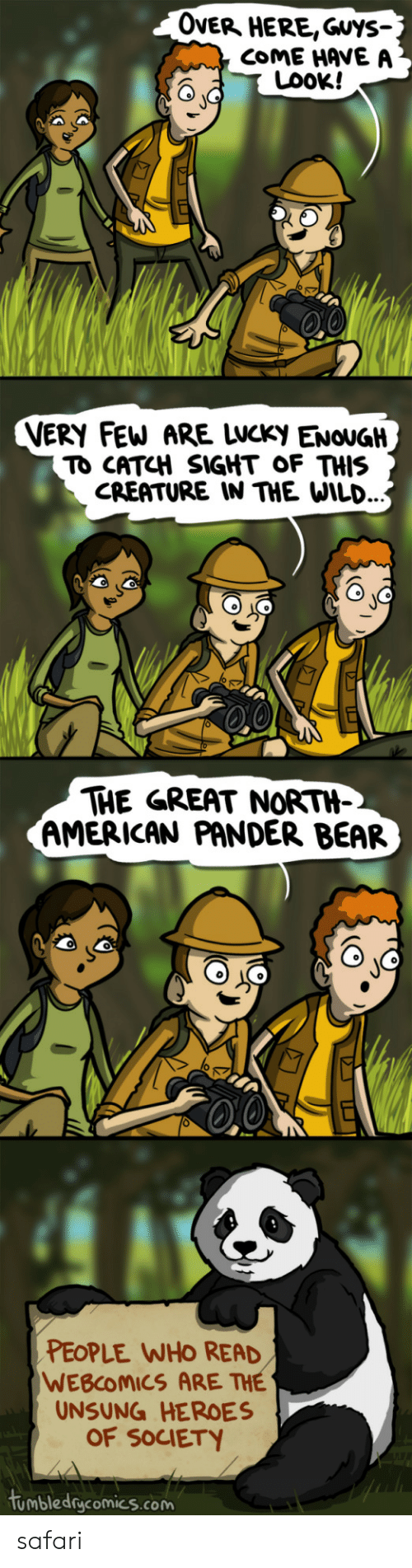 American, Bear, and Heroes: OveR HERE,Guys-  COME HAVE A  LOOK!  VERY FEW ARE LWCKy ENOUGH  TO CATCH SIGHT OF THIS  CREATURE IN THE WILD.  THE GREAT NORTH-  AMERICAN PANDER BEAR  PEOPLE WHO READ  WEBCOMICS ARE THE  UNSUNG HEROES  OF SOCIETY  tumbledgcomics.com safari