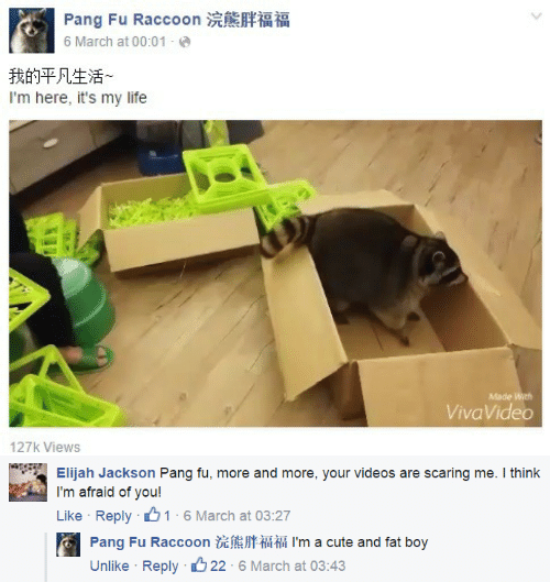Cute, Life, and Videos: Pang Fu Raccoon  6 March at 00:01  我的平凡生活~  I'm here, it's my life  Made With  VivaVideo  127k Views  KU   Elijah Jackson Pang fu, more and more, your videos are scaring me. I think  I'm afraid of you!  Like Reply 1 6 March at 03:27  Pang Fu Raccoon  I'm a cute and fat boy  Unlike Reply 22 6 March at 03:43