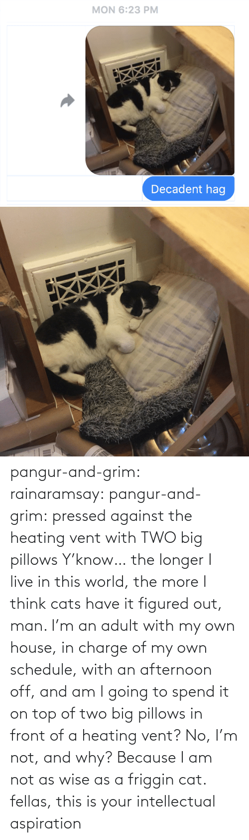 House: pangur-and-grim: rainaramsay:  pangur-and-grim: pressed against the heating vent with TWO big pillows Y'know… the longer I live in this world, the more I think cats have it figured out, man. I'm an adult with my own house, in charge of my own schedule, with an afternoon off, and am I going to spend it on top of two big pillows in front of a heating vent? No, I'm not, and why? Because I am not as wise as a friggin cat.  fellas, this is your intellectual aspiration
