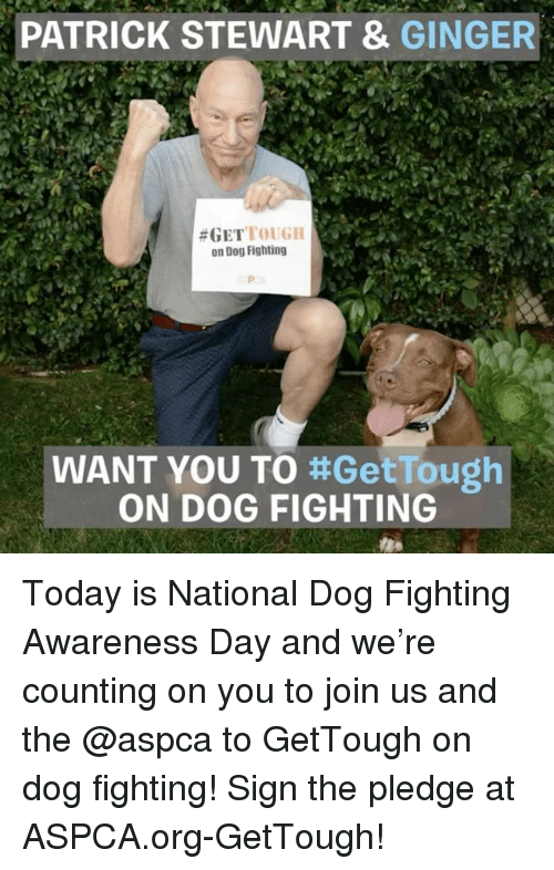 gingerly: PATRICK STEWART &  GINGER  #GET  TOUGH  on Dog Fighting  WANT YOU TO  ttGetTough  ON DOG FIGHTING Today is National Dog Fighting Awareness Day and we're counting on you to join us and the @aspca to GetTough on dog fighting! Sign the pledge at ASPCA.org-GetTough!
