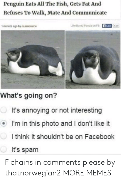 Bored Panda: Penguin Eats All The Fish, Gets Fat And  Refuses To Walk, Mate And Communicate  1 minute ago by OLANDUNIC  Lhe Bored Panda on FB  R-  Lke  LEM  What's going on?  It's annoying or not interesting  I'm in this photo and I don't like it  I think it shouldn't be on Facebook  It's spam F chains in comments please by thatnorwegian2 MORE MEMES