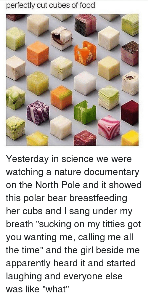 "apparate: perfectly cut cubes of food Yesterday in science we were watching a nature documentary on the North Pole and it showed this polar bear breastfeeding her cubs and I sang under my breath ""sucking on my titties got you wanting me, calling me all the time"" and the girl beside me apparently heard it and started laughing and everyone else was like ""what"""