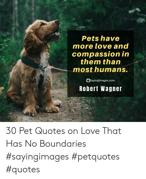 Compassion: Pets have  more love and  compassion in  them than  most humans.  SayingImages.com  Robert Wagner 30 Pet Quotes on Love That Has No Boundaries #sayingimages #petquotes #quotes