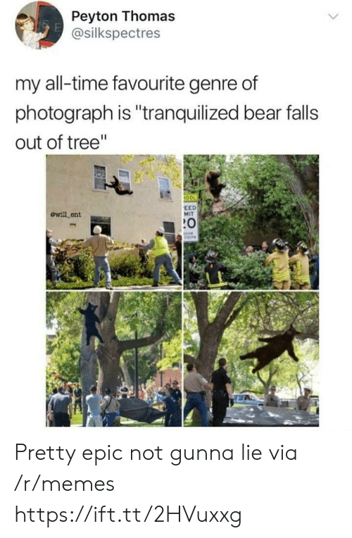 """Anaconda, Memes, and Bear: Peyton Thomas  @silkspectres  my all-time favourite genre of  photograph is """"tranquilized bear falls  out of tree""""  100  ewill ent  EED  MIT  :0 Pretty epic not gunna lie via /r/memes https://ift.tt/2HVuxxg"""
