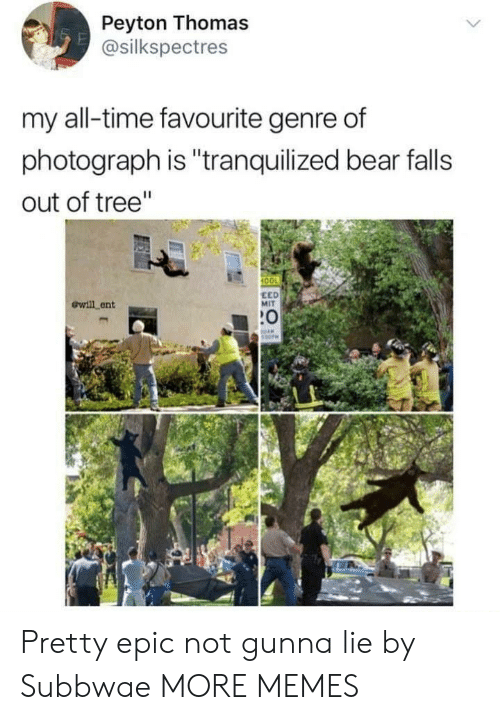 """Anaconda, Dank, and Memes: Peyton Thomas  @silkspectres  my all-time favourite genre of  photograph is """"tranquilized bear falls  out of tree""""  100  ewill ent  EED  MIT  :0 Pretty epic not gunna lie by Subbwae MORE MEMES"""