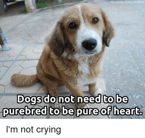 Crying, Dogs, and Not Crying: Photo by Brett McBain  to be  Dogs do nt need t  DUreDred to De puRe or heart. I'm not crying