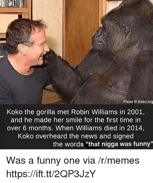 """Funny, Memes, and News: Photo Koko.org  Koko the gorilla met Robin Williams in 2001,  and he made her smile for the first time in  over 6 months. When Williams died in 2014,  Koko overheard the news and signed  the words """"that nigga was funny"""" Was a funny one via /r/memes https://ift.tt/2QP3JzY"""