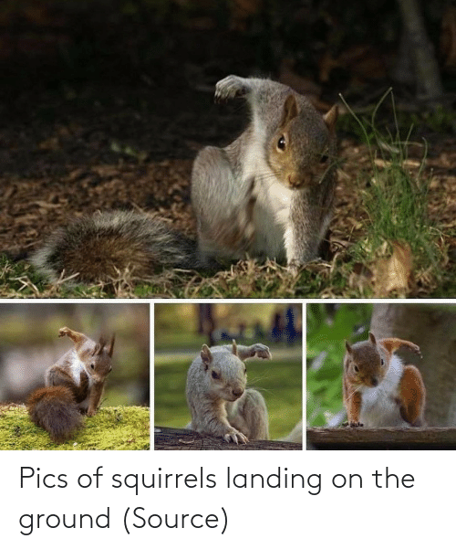 Aww, Reddit, and Target: Pics of squirrels landing on the ground (Source)