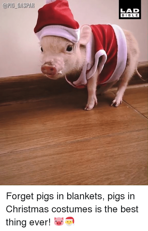 Christmas, Dank, and Best: @PIG GASPAR  LAD  BIBL E Forget pigs in blankets, pigs in Christmas costumes is the best thing ever! 🐷🎅