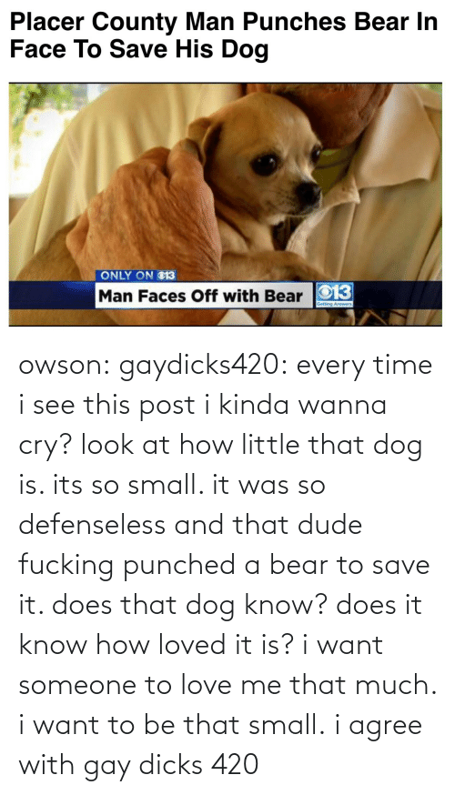 Want Someone: Placer County Man Punches Bear In  Face To Save His Dog   ONLY ON O13  Man Faces Off with Bear O13 owson: gaydicks420:  every time i see this post i kinda wanna cry? look at how little that dog is. its so small. it was so defenseless and that dude fucking punched a bear to save it. does that dog know? does it know how loved it is? i want someone to love me that much. i want to be that small.  i agree with gay dicks 420