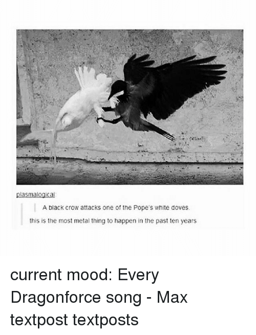 metallic: plasmalogical  A black crow attacks one of the Pope's white doves.  this is the most metal thing to happen in the past ten years current mood: Every Dragonforce song - Max textpost textposts