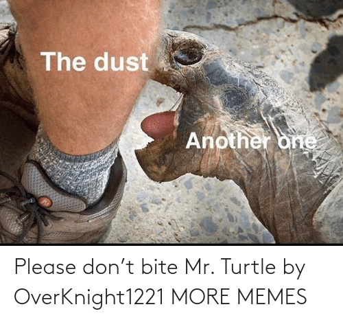 don: Please don't bite Mr. Turtle by OverKnight1221 MORE MEMES