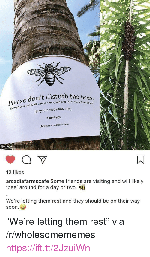 """arcadia: Please don't distu  the bees,  out of here soon  on a quest for a new home, and will """"bee  They're on a  (they just need a little rest)  Thank you.  Arcadia Farms Marketplace  12 likes  arcadiafarmscafe Some friends are visiting and will likely  'bee' around for a day or two.  We're letting them rest and they should be on their way  soon <p>""""We're letting them rest"""" via /r/wholesomememes <a href=""""https://ift.tt/2JzuiWn"""">https://ift.tt/2JzuiWn</a></p>"""