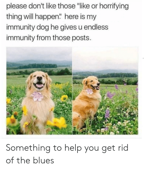 """Help, Blues, and Dog: please don't like those """"like or horrifying  thing will happen"""" here is my  immunity dog he gives u endless  immunity from those posts. Something to help you get rid of the blues"""
