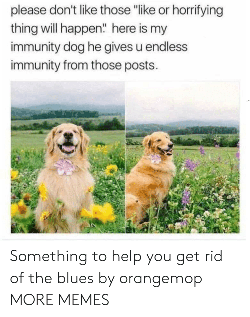 """Dank, Memes, and Target: please don't like those """"like or horrifying  thing will happen"""" here is my  immunity dog he gives u endless  immunity from those posts. Something to help you get rid of the blues by orangemop MORE MEMES"""