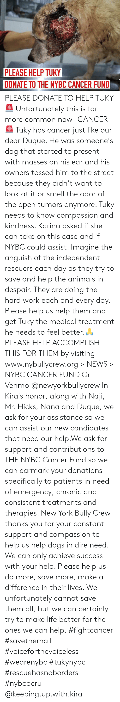 Animals, Dogs, and Life: PLEASE HELP TUKY  DONATE TO THE NYBC CANCER FUND PLEASE DONATE TO HELP TUKY🚨 Unfortunately this is far more common now- CANCER🚨 Tuky has cancer just like our dear Duque. He was someone's dog that started to present with masses on his ear and his owners tossed him to the street because they didn't want to look at it or smell the odor of the open tumors anymore. Tuky needs to know compassion and kindness. Karina asked if she can take on this case and if NYBC could assist. Imagine the anguish of the independent rescuers each day as they try to save and help the animals in despair.  They are doing the hard work each and every day. Please help us help them and get Tuky the medical treatment he needs to feel better.🙏 PLEASE HELP ACCOMPLISH THIS FOR THEM by visiting www.nybullycrew.org > NEWS > NYBC CANCER FUND Or Venmo @newyorkbullycrew  In Kira's honor, along with Naji, Mr. Hicks, Nana and Duque, we ask for your assistance so we can assist our new candidates that need our help.We ask for support and contributions to THE NYBC Cancer Fund so we can earmark your donations specifically to patients in need of emergency, chronic and consistent treatments and therapies. New York Bully Crew thanks you for your constant support and compassion to help us help dogs in dire need. We can only achieve success with your help. Please help us do more, save more, make a difference in their lives. We unfortunately cannot save them all, but we can certainly try to make life better for the ones we can help.  #fightcancer #savethemall #voiceforthevoiceless #wearenybc #tukynybc #rescuehasnoborders #nybcperu @keeping.up.with.kira