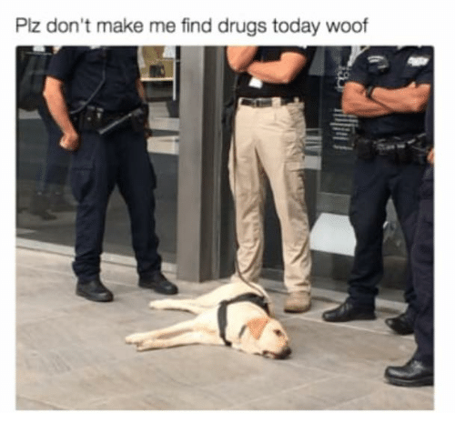 woofing: Plz don't make me find drugs today woof