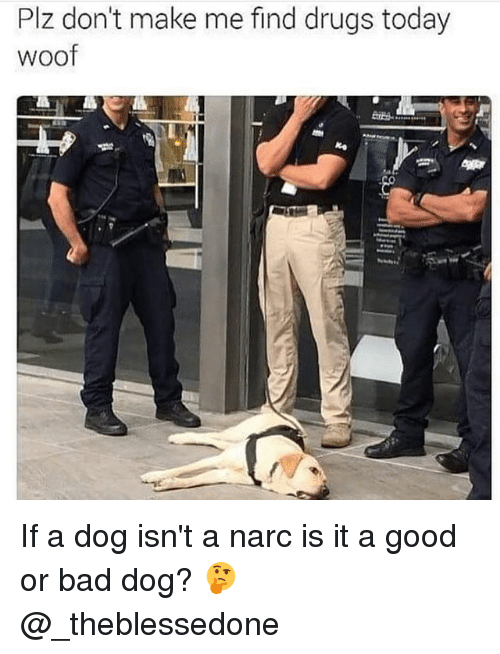 woofing: Plz don't make me find drugs today  woof If a dog isn't a narc is it a good or bad dog? 🤔 @_theblessedone