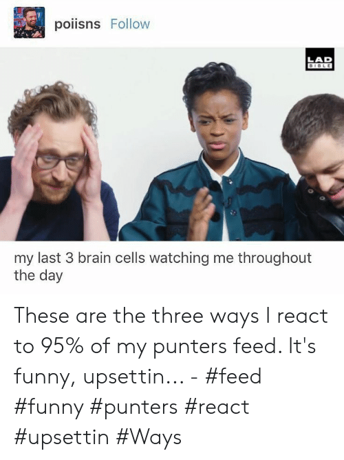 Its Funny: poiisns Follow  LAD  BIBLE  my last 3 brain cells watching me throughout  the day These are the three ways I react to 95% of my punters feed. It's funny, upsettin... - #feed #funny #punters #react #upsettin #Ways