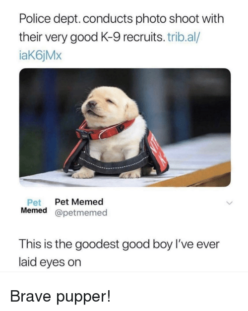 Police, Brave, and Good: Police dept. conducts photo shoot with  their very good K-9 recruits. trib.al/  iaK6jMx  Pet Pet Memed  Memed @petmemed  est good boy l've ever  T his is the good  laid eyes on Brave pupper!