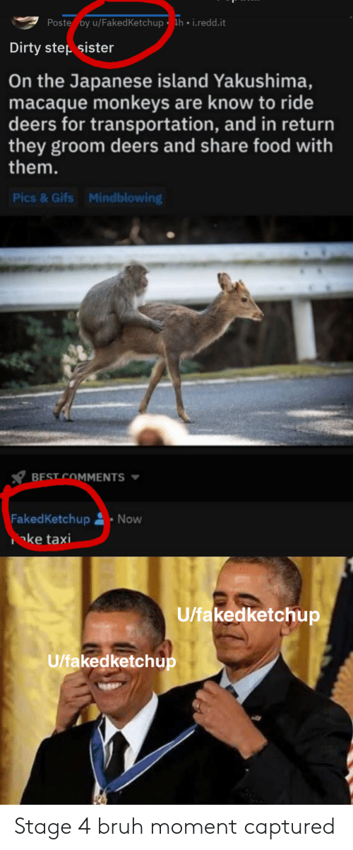 Share Food: Poste by u/Faked Ketchup h . i.redd.it  Dirty step sister  On the Japanese island Yakushima,  macaque monkeys are know to ride  deers for transportation, and in return  they groom deers and share food with  them.  Pics & Gifs  Mindblowing  BEST COMMENTS  FakedKetchup Now  ke taxi  U/fakedketchup  U/fakedketchup Stage 4 bruh moment captured